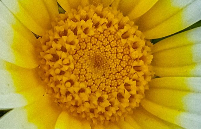 Fibonacci 11