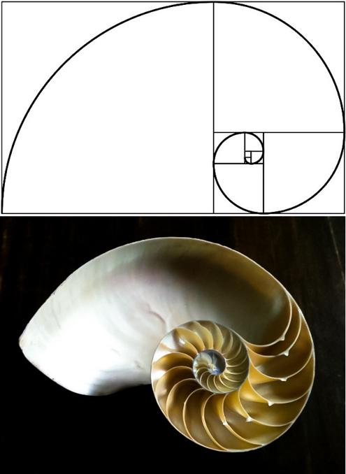 Fibonacci 13